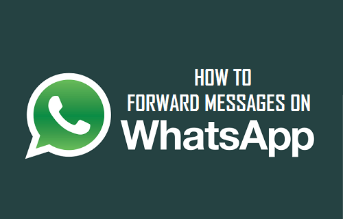 Forward Messages In WhatsApp