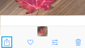 Share Icon on iPhone Photos App