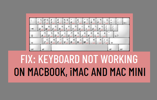 Keyboard Not Working on Mac